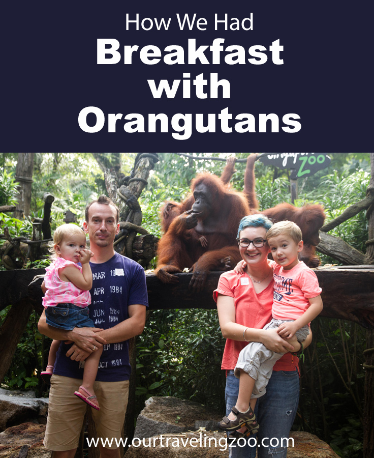 we had breakfast with orangutans