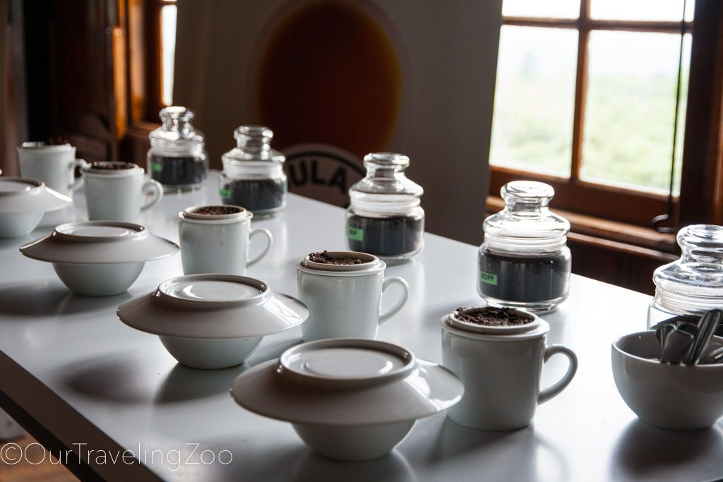 Kandy tea plantation tea samples