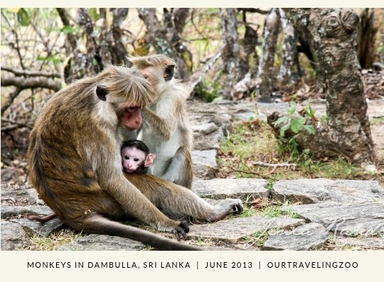 Wednesday Postcard: Sri Lanka