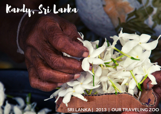 Wednesday Postcard: Kandy, Sri Lanka