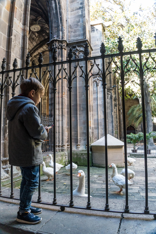 Barcelona Cathedral is fun for the kids thanks to the flock of 13 geese that live in the cloister.
