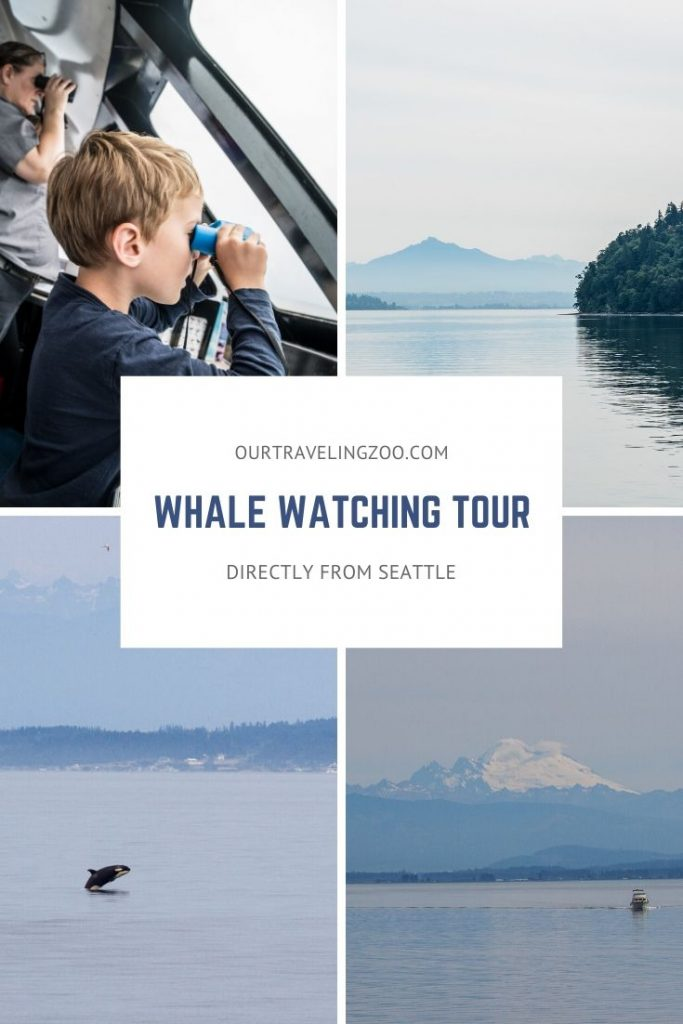 Whale Watching Tour directly from Seattle with Clipper Vacations