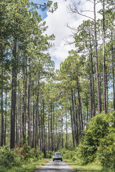 drive through Okefenokee National Wildlife Refuge
