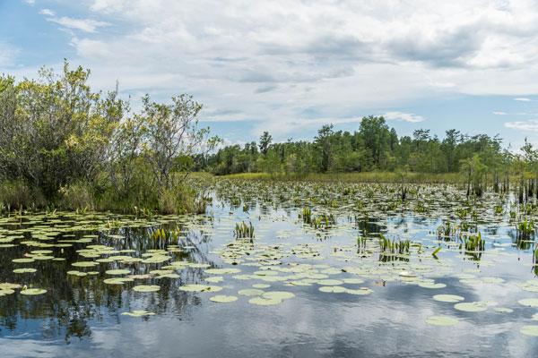 Okefenokee swamp boat tours