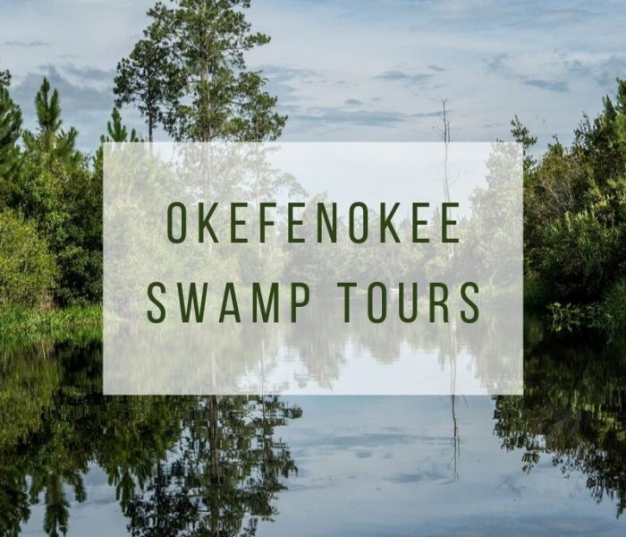 Okefenokee Swamp Tours: Swamp Park vs National Wildlife Refuge