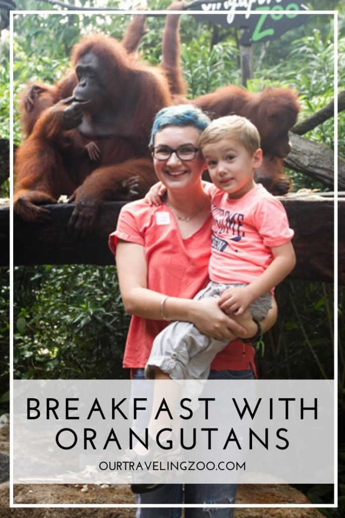 Read our review of Breakfast with Wildlife in Singapore Zoo