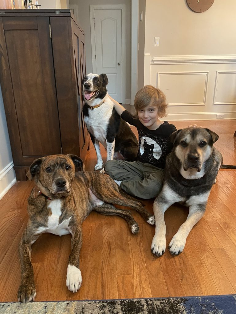 young boy sitting on the floor with three large dogs